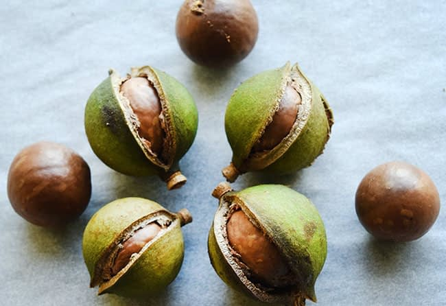 macadamia nut in South Africa