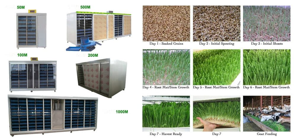green fodder growing system